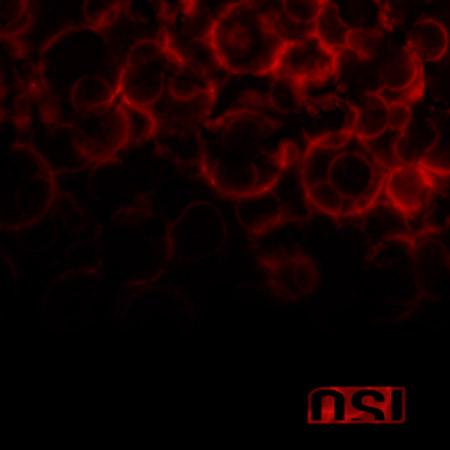 OSI - Blood (2009)
